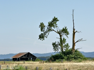 Image, 2005, Barn, Tree, click to enlarge