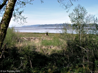 Image, 2004, Grays Bay, Washington, click to enlarge