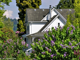 Image, 2005, Hulda Klager Lilac Gardens, Woodland, Washington, click to enlarge