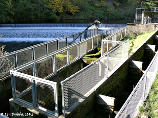Image, 2004, Falls and ladder at Little White Salmon Fish Hatchery, click to enlarge