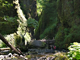 Image, 2005, Oneonta Gorge, click to enlarge