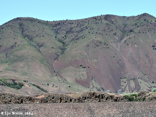 Image, 2004, Columbia Hills, click to enlarge