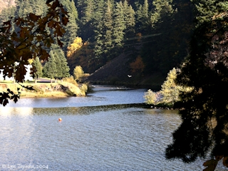 Image, 2004, Mouth of the Little White Salmon River, at fish hatchery click to enlarge