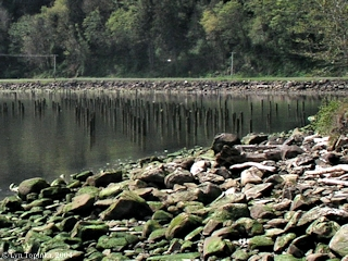 Image, 2004, Megler Cove, Megler Rest Area, click to enlarge