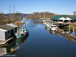 Image, 2005, Mouth of the Clatskanie River-Beaver Slough, click to enlarge