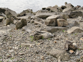 Image, 2005, Piling remains, Fishers Landing, click to enlarge