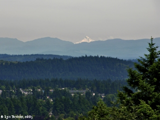 Image, 2005, Mount Jefferson from Rocky Butte, click to enlarge