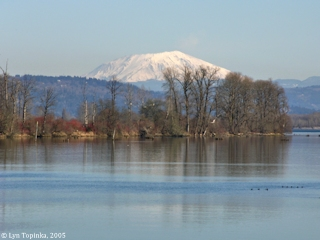 Image, 2005, Mount St. Helens from Bradbury Slough, click to enlarge