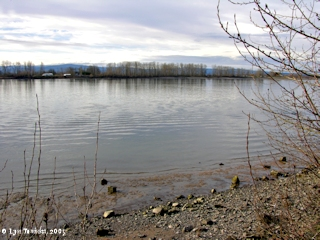 Image, 2004, Columbia River and Sauvie Island, from Post Office Lake, click to enlarge