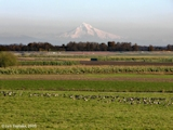 Image, 2005, Sauvie Island and Mount Hood
