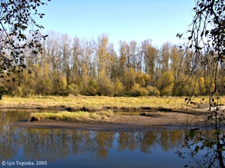 Image, 2005, Willow Bar Island, Sauvie Island, click to enlarge
