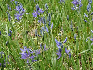 Image, 2009, Camassia Nature Preserve, Oregon, click to enlarge