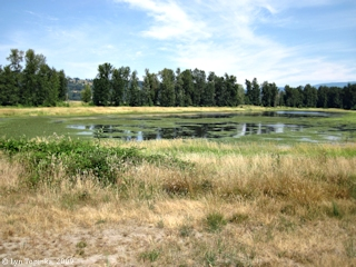 Image, 2009, Steigerwald Lake NWR, click to enlarge