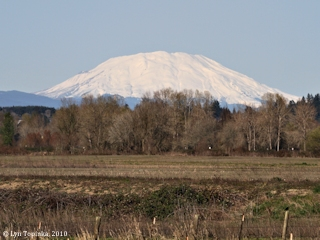 Image, 2010, Mount St. Helens as seen from Blurock Landing, click to enlarge