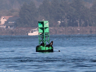 Image, 2011, Buoy, Columbia River at Clatsop Spit, click to enlarge