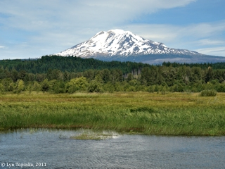 Image, 2011, Mount Adams from Trout Lake, Washington, click to enlarge