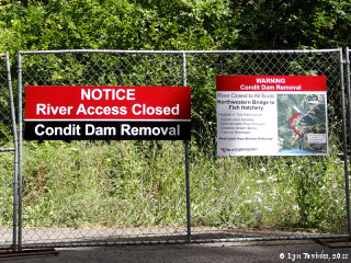 Image, 2011, White Salmon River, Condit Dam Removal signs, click to enlarge