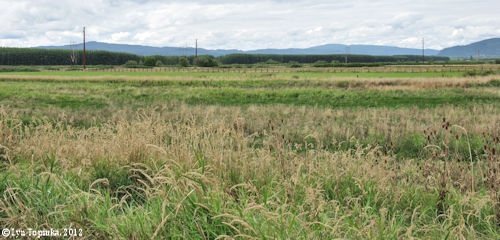 Image, 2012, Clatskanie floodplain, Oregon, click to enlarge