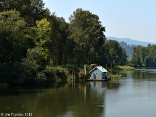 Image, 2012, Westport Slough, Clatskanie, Oregon, click to enlarge