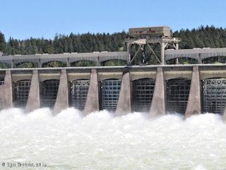 Image, 2014, Bonneville Dam, on the Columbia River click to enlarge