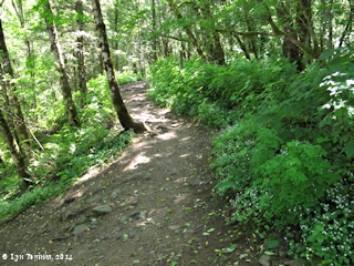 Image, 2014, Elowah Falls Trail, Columbia River Gorge, click to enlarge