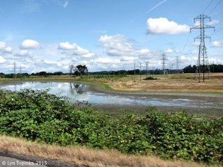 Image, 2015, Lower River Road Pond, Vancouver, Washington, click to enlarge