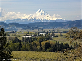 Image, 2015, Mount Hood from Panorama Point, Hood River, Oregon, click to enlarge