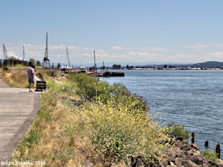 Image, 2016, Columbia Shores, Renaissance Trail, Vancouver, Washington, click to enlarge