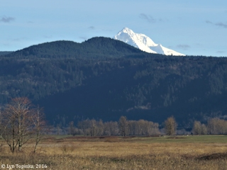 Image, 2016, Pepper Mountain and Mount Hood, Oregon, from Steigarwald Lake NWR, click to enlarge