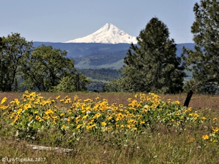 Image, 2017, Mount Hood near Lyle, Washington, click to enlarge