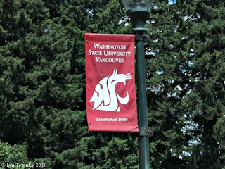 Image, 2018, Washington State University, Vancouver, Washington, click to enlarge